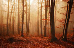 autumn forest in brown