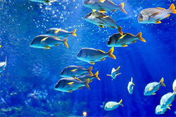 tropical fish in the blue sea
